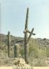 Cactus viagras