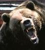 Mitt siste bilde: Bjørn