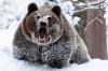 Mitt siste bilde: Bjørn i snøen