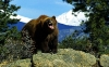 Mitt siste bilde: Sint bjørn