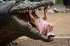 Mitt siste bilde: Krokodillejeger