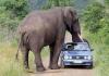 Mitt siste bilde: Elefant
