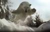 Mitt siste bilde: Isbjørn