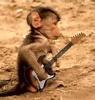 Ape som spiller gitar