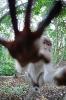 Ape vil ikke bli fotografert