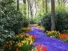Fargefull blomsterpark