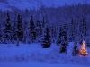 Vinterskog med brennende tre