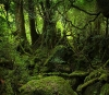 Sopp-skog