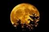 Fullmåne gul