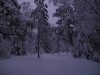 nordmarka_0788